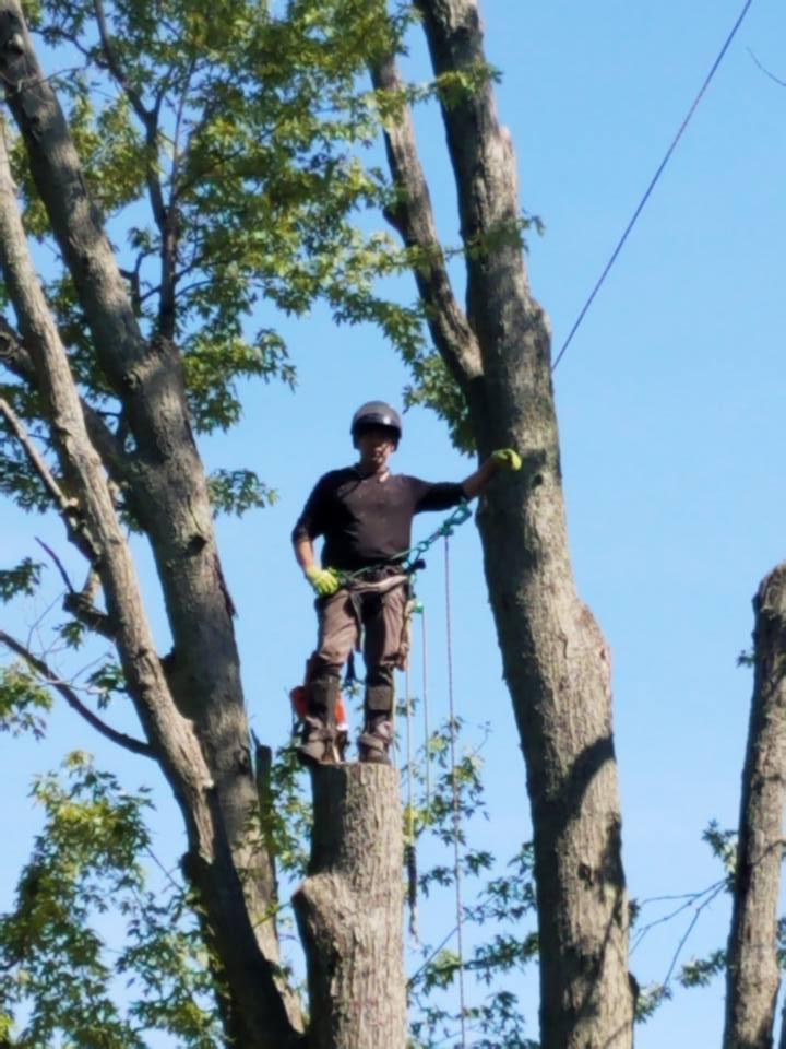 Tree removal in Oakland County Michigan