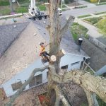 Back yard tree removal