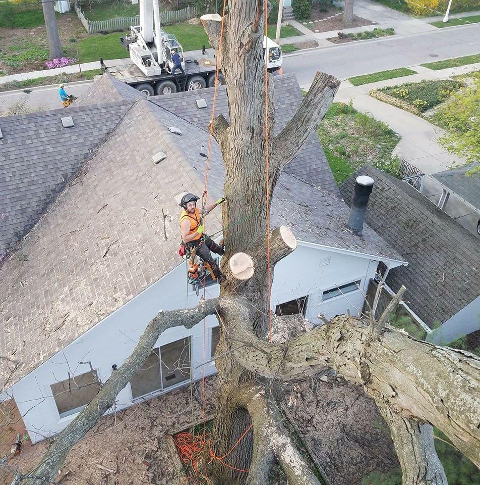 Back yard tree removal