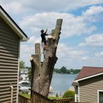 Tree removal on Walled Lake Michigan
