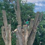 Big tree removal