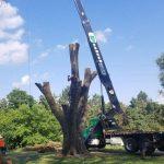 Crane removing a tree in Commerce, MI