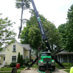 Crane assisted tree removal in Plymouth, Michigan