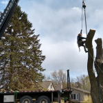 Quinlan Tree Service Crane Rental in Oakland County, Michigan