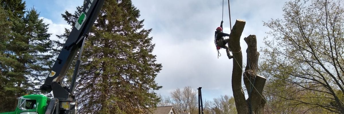 tree service, tree removal, tree trimming, tree pruning and crane service
