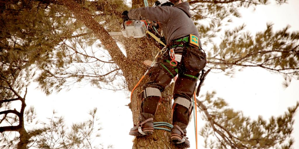 Arborist Commerce Michigan, Quinlan Tree Service