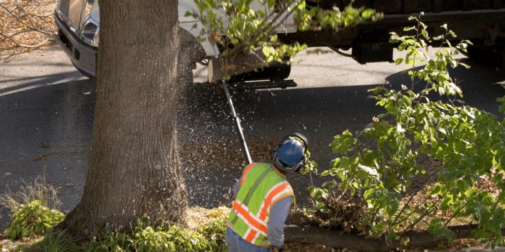 Tree Trimming Service Commerce Michigan, Quinlan Tree Service